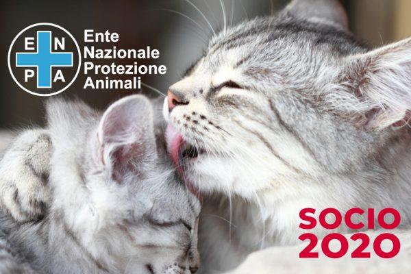 SOCIO 2020
